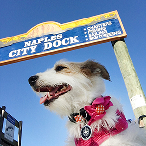 Paws  pet boutique's Shop Dog Gracie at Naples City Dock