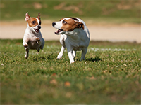 Preventing Fleas and Ticks on Pets