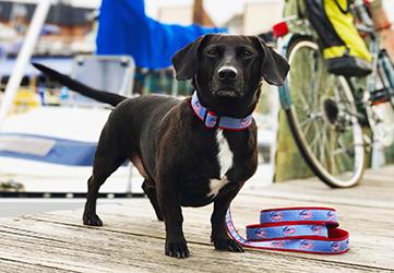 Crab American Flag Dog Collar