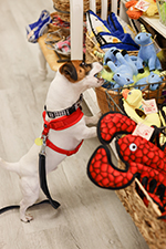 George Shops for Dog Toys at Paws Pet Boutique