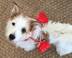 Paws pet boutique's pup, Gracie, is celebrating her Gotcha Day 1 year anniversary!