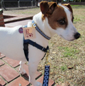 No-Pull Front Ring Dog Harnesses at PawsPetBoutique.com