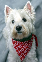 Holiday Pet Photo Party to Benefit Tails of Hope