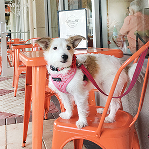 Dog Friendly Naples Restaurants by Paws pet boutique