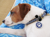 Stainless Steel Pet ID Tags with Removable Pet Tag Holder Help to Keep Your Pet Safe
