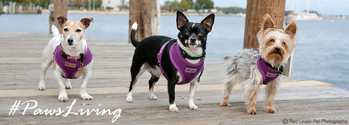 #PawsLiving to Share Happy Moments with Paws pet boutique