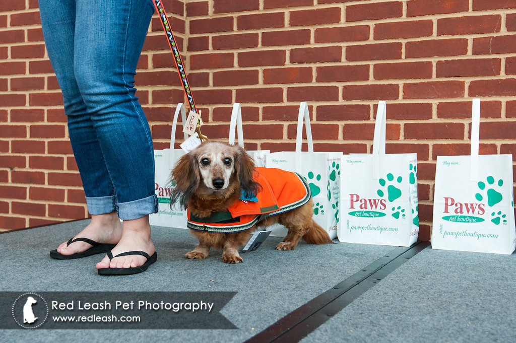 red-leash-paws-fashion-show-2014-6-2-w.jpg