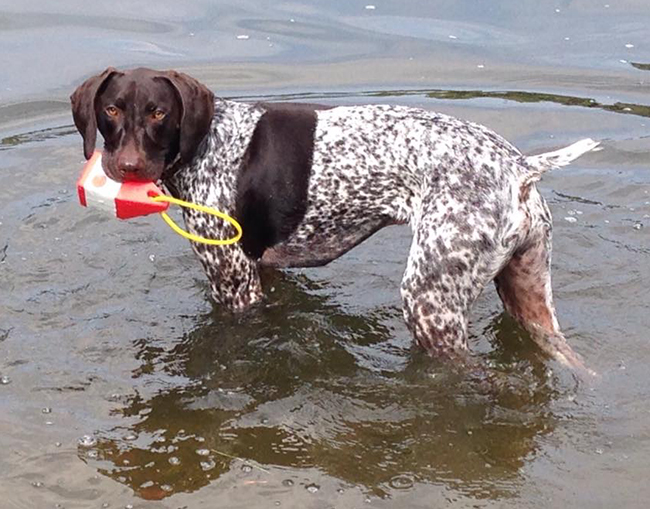 Ryeder #Pawsliving with Floating Buoy Toy