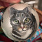 Hand-painted Cat Holiday Ornament