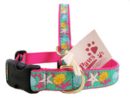 The Perfect Dog Collar for your Beach Dog!