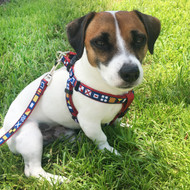 George is wearing a small nautical flag harness.