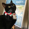 Ali wears a Small Bow Tie Cat Collar