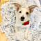 Gracie loves her Super Soft Dog Blanket