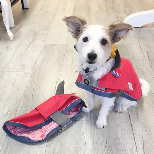 "Gracie wearing a size 14"" handmade dog raincoat."