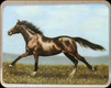 "River's Edge - Horse - Tempered Glass Cutting Board - 12""x16"" - 788B"