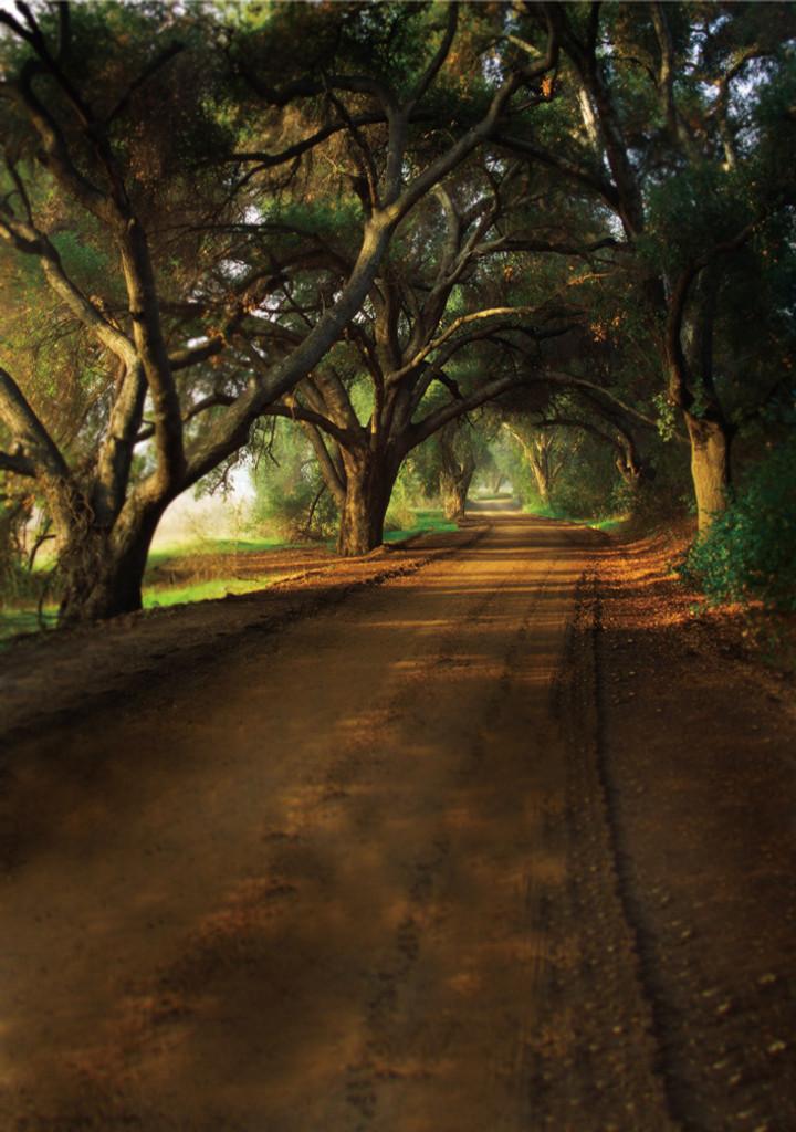 Old Oak Lane Backdrop