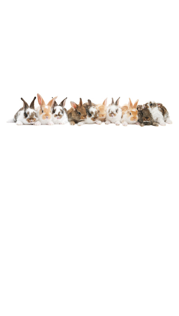 Bunnies Galore Backdrop