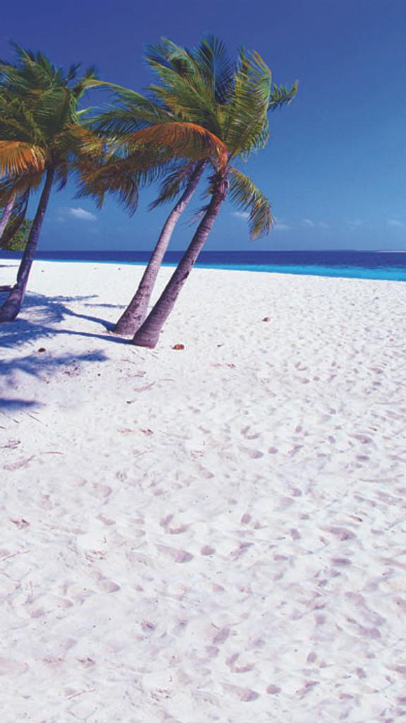 Palm Beach Backdrop