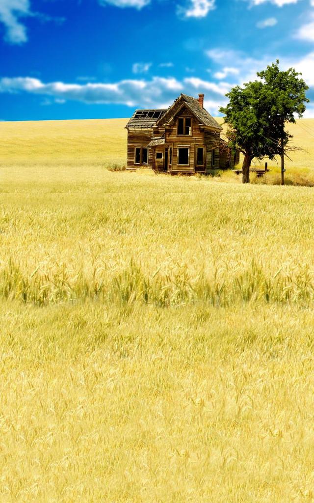 Abandoned Farm House Backdrop