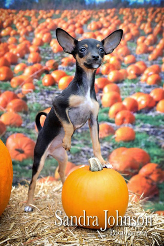 Pumpkins Galore Backdrop