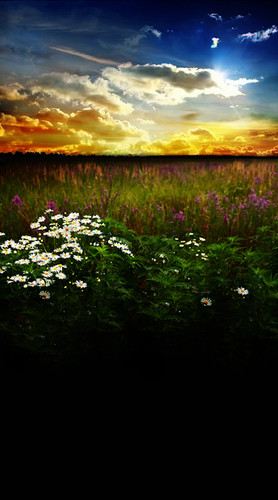 Wildflowers At Sunset Backdrop