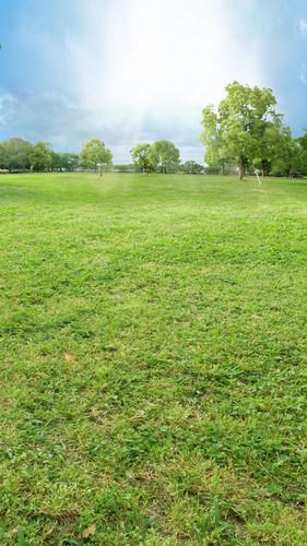 Park Field Backdrop