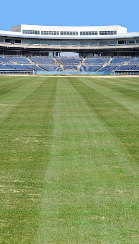 Baseball Field Backdrop