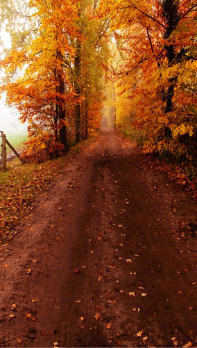 Autumn Dirt Road Backdrop