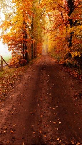 Autumn Dirt Road Backdrop