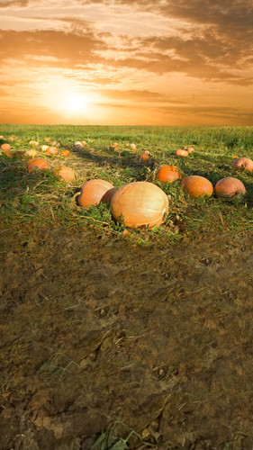 Pumpkin Sunrise Backdrop