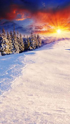 Christmas Sunburst Backdrop