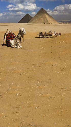 Egyptian Camel Ride Backdrop