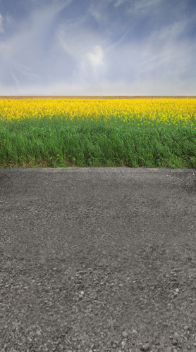 Yellow Flower Road Backdrop