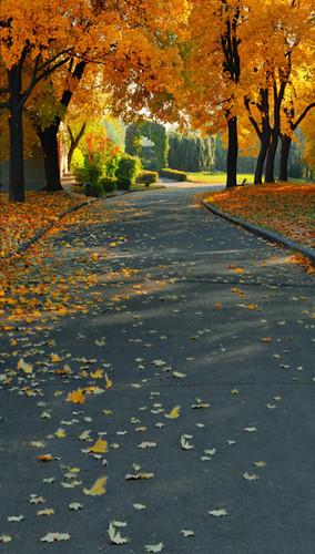 Autumn Walk Backdrop