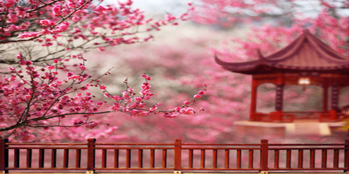 Spring Pagoda Wide Format