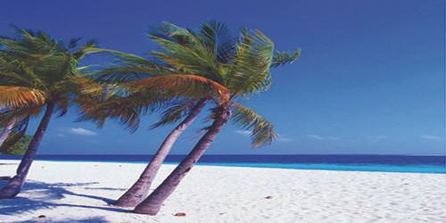 Palm Beach Wide Format