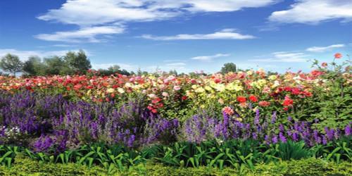 Flower Field Wide Format