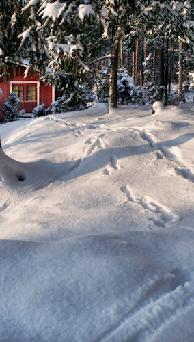 Footprints in the Snow Backdrop