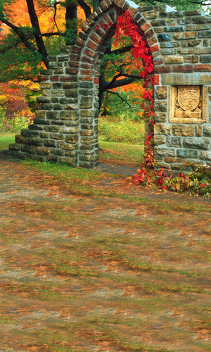 Autumn Relic Photography Backdrops