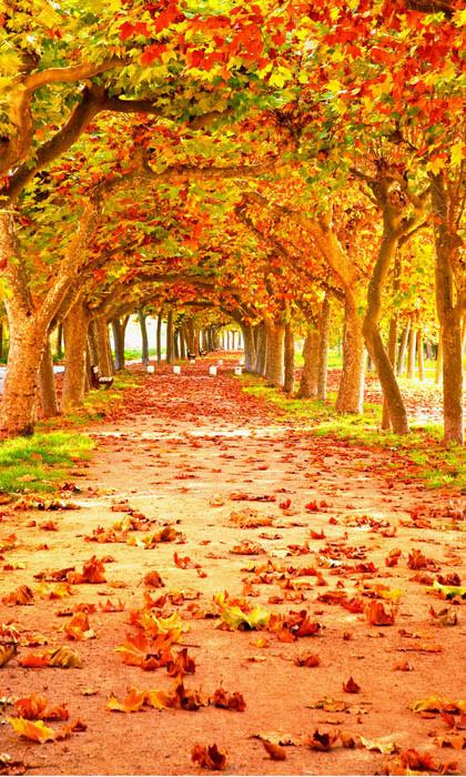 Fall Trail Backdrop Photo Pie