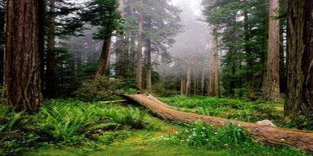 Forest Meadow Wide Format Photo Pie