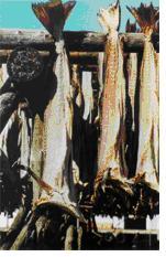 Stockfish_in_Lofoten_par1.JPG