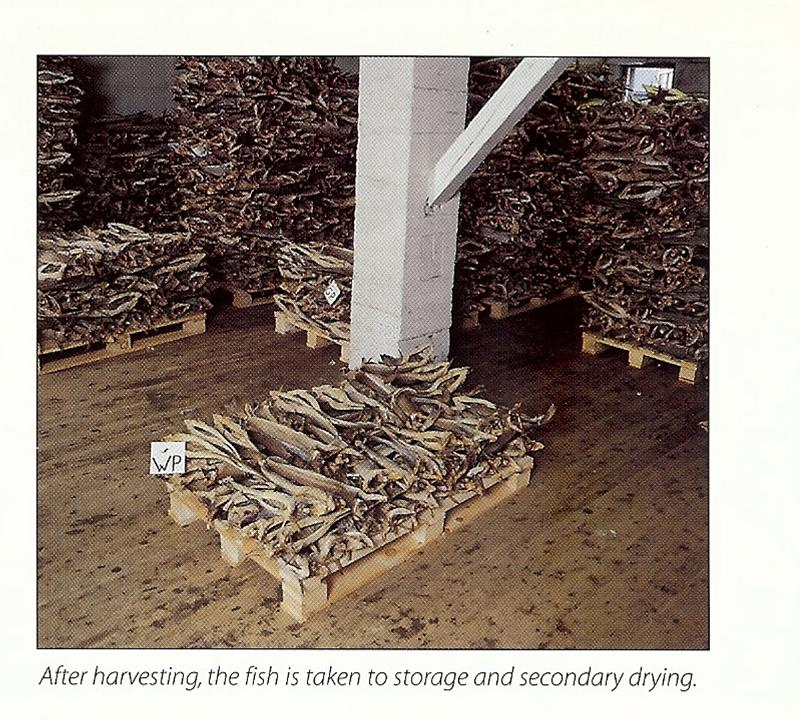 stockfish_harvested.jpg