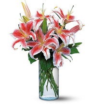 Fragrant Lovely Lilies