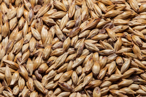 GoldSwaen© Red (CaraRed), The Swaen Malt 1 lb