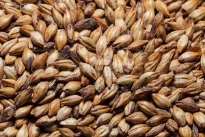 CaraMunich 35°L, The Swaen Malt 1 lb