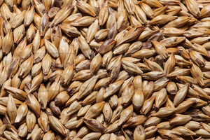 CaraMunich 45°L, The Swaen Malt 1 lb
