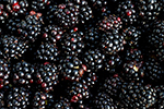 blackberry-446427-640.jpg