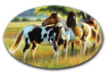 SafeArt Magnet Picture - Pature Buddies, Horses