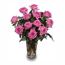 VD17 Pink Bliss Roses